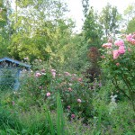 La cabane au fond du jardin !