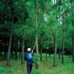 Reforestation au Brésil