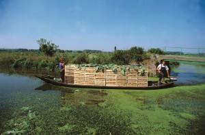 Barques de maraîcher (photo Pascal Morès)