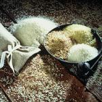 Chaque variété de riz a des qualités nutritives différentes