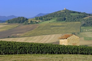 Vignobles à flanc de coteaux avec la chaîne des Puys au fond