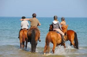 Les chevaux aiment beaucoup avoir les jambes massées par l'eau froide