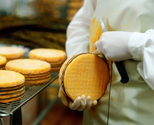 Manuellement la laiche qui entoure par 5 fois le fromage est posée