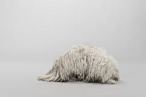Serpillère ou chien ? allez savoir avec la photo de l'espagnol Pablo Axpe