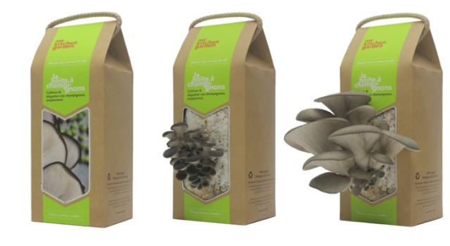 La Boîte à champignons en diverses phases de pousse