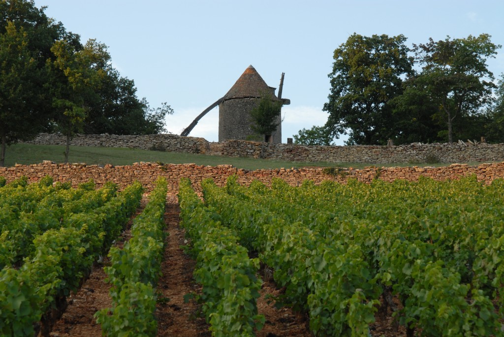 Le charmant moulin au coeur des vignes de Cellier aux Moines