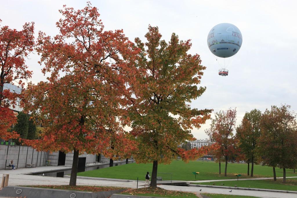 Liquidambars près du ballon captif du parc Citroën