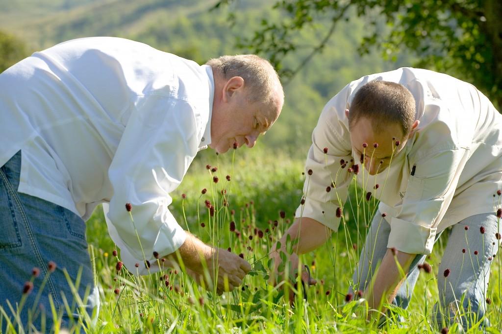 Recherche d'herbes aux beaux jours