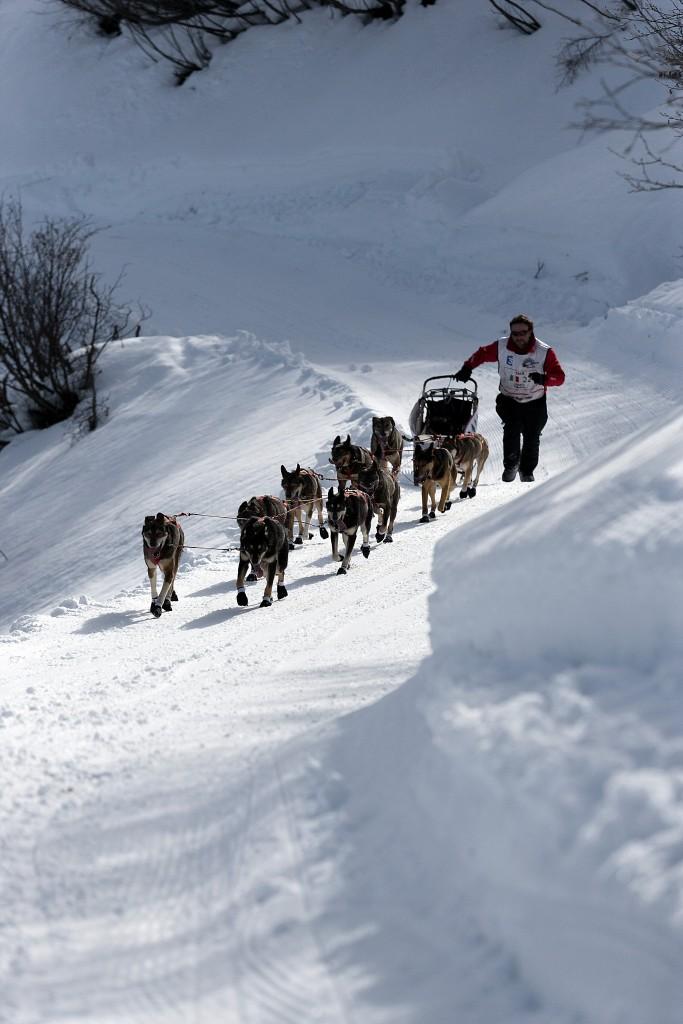 Dans les fortes montées il est fréquent que le musher aide ses chiens en étant lui même à pied