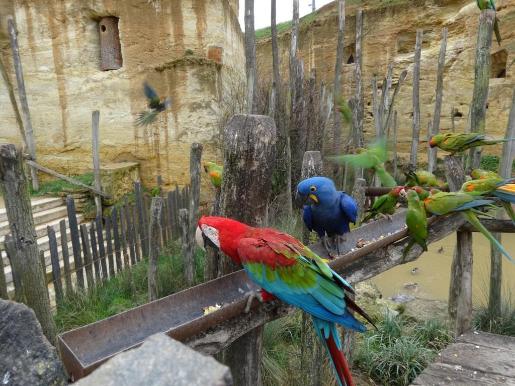 Espèces protégées au Bioparc, zoo troglodytique