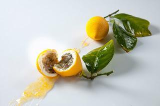 Le somptueux et fabuleux citron de Cédric Grolet au Meurice