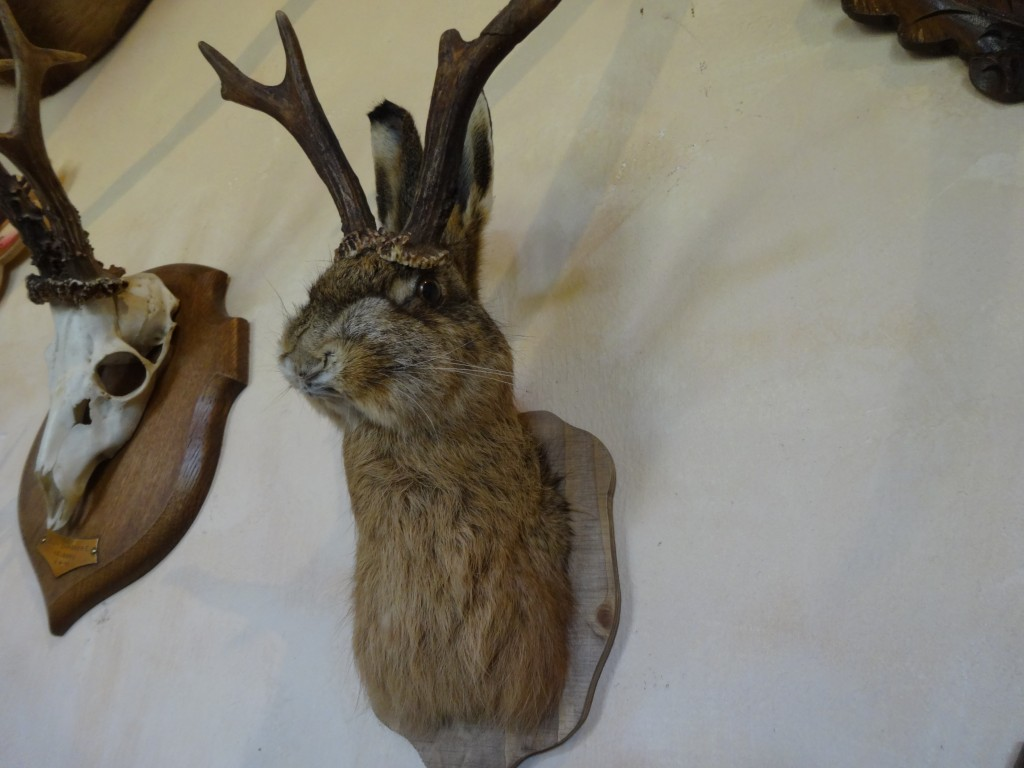 Drôle de lapin !