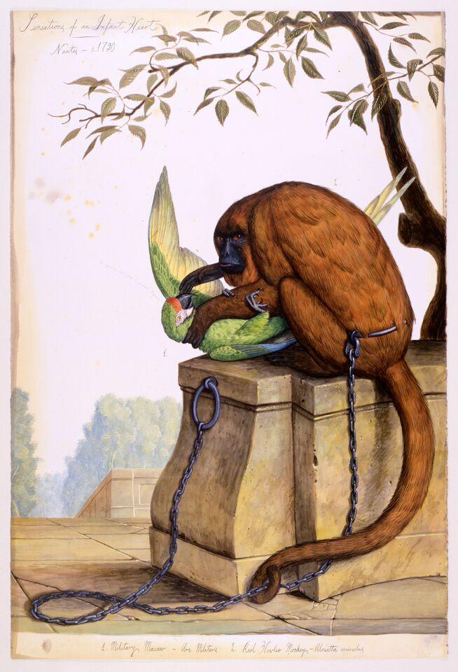 Le singe et le perroquet