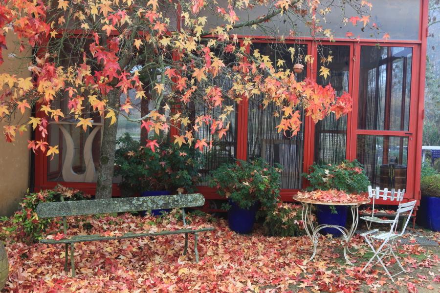 Un liquidambar à l'automne