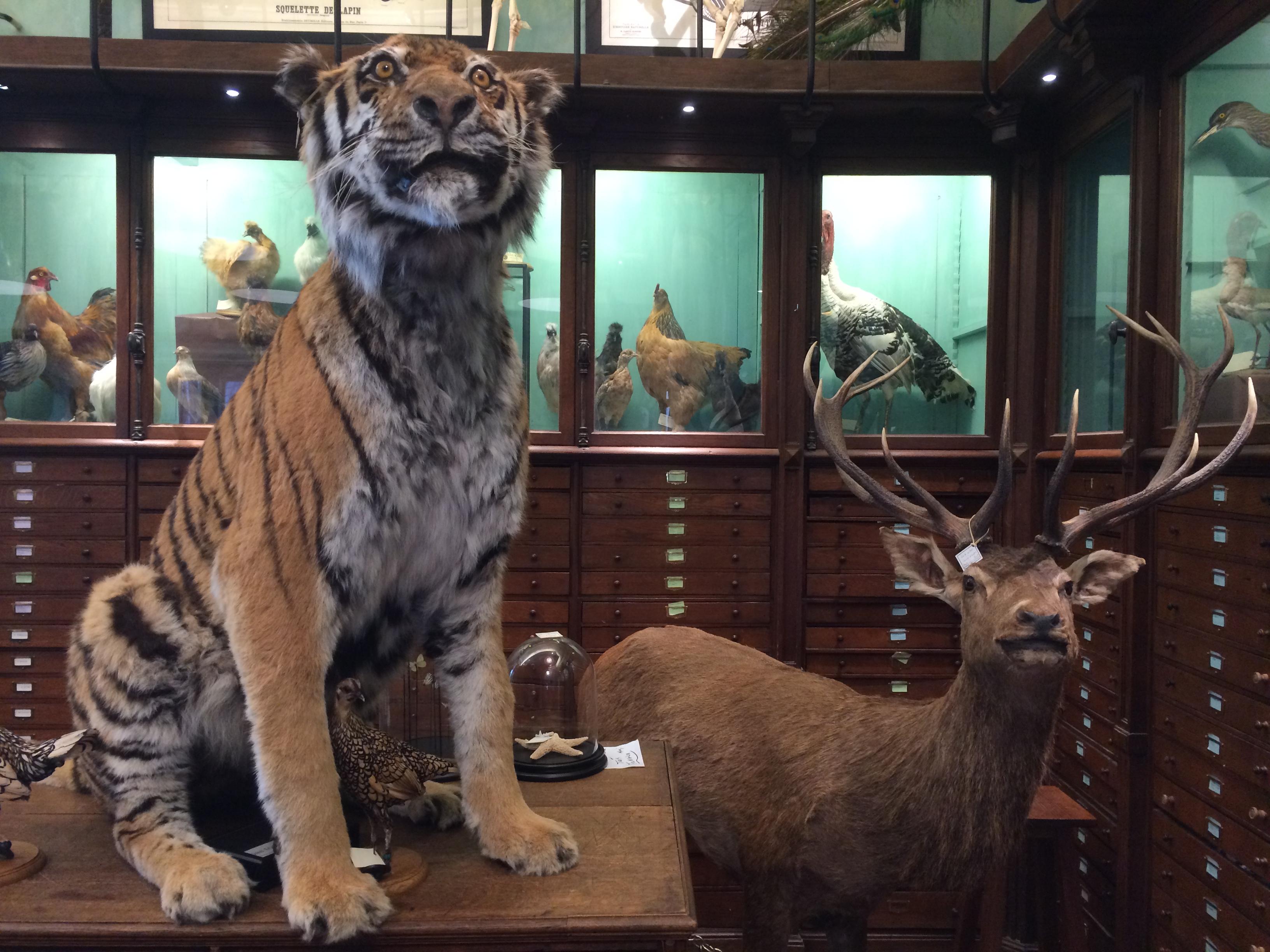 Deyrolle et ses animaux empaillés se visite comme une expo