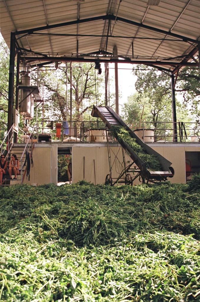 L'extraction à partir des plantes