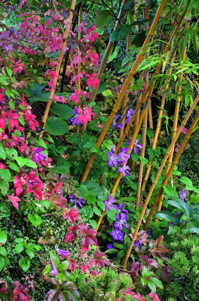 Mélange de plantes dans le jardin