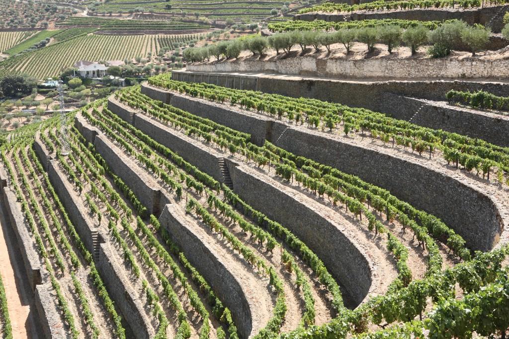 Les vignobles de la quinta de Vargellas
