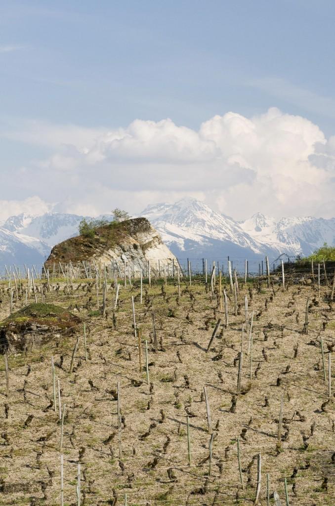 Les vignobles les plus hauts de France, ici : Apremont