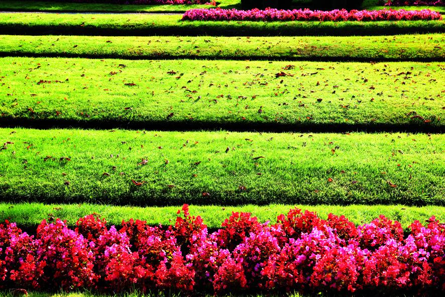 Comme une alternance de pelouses et de parterres fleuris