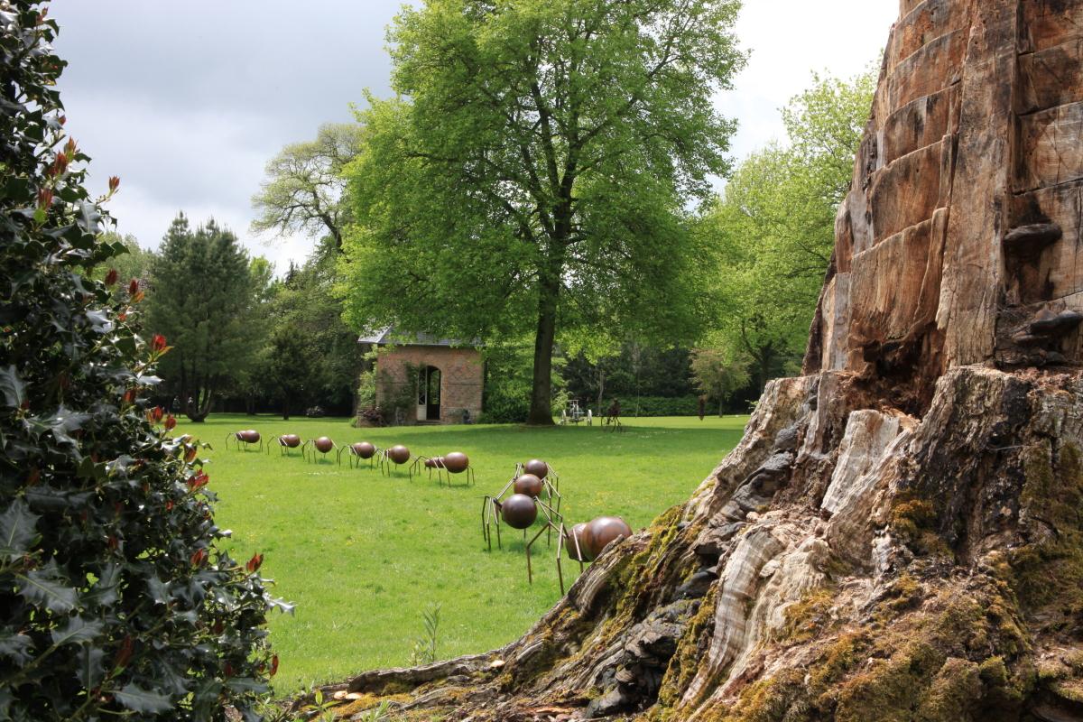 L 39 evasion des sens jean marc de pas bois guilbert - Fourmis dans le jardin ...