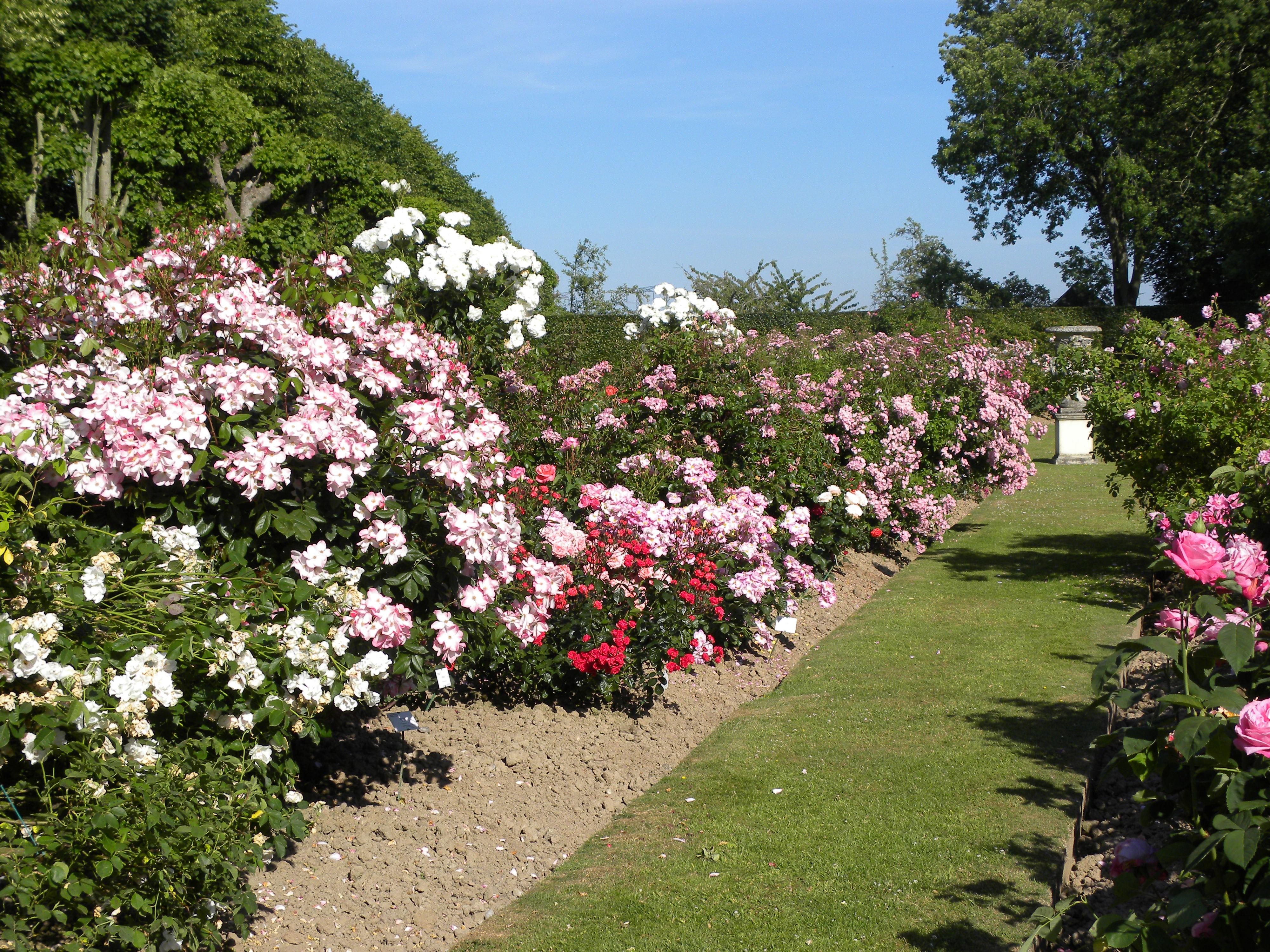 Plusieurs roseraies ponctuent le parc