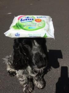 Même la mascotte Truffe peut avoir besoin de Lotus !