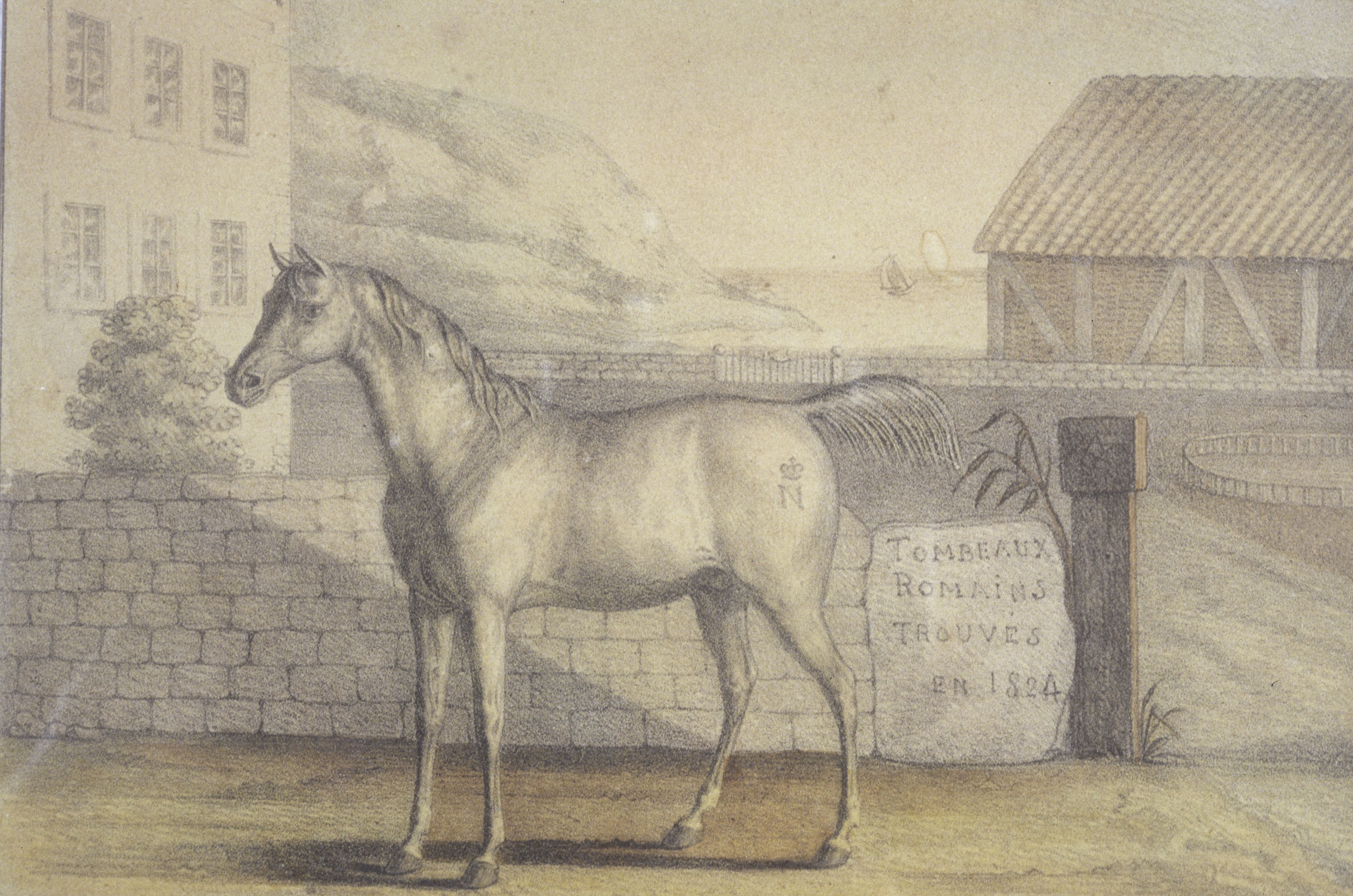 Vizir le cheval de Napoléon ( RMN Grand Palais P Segrette)