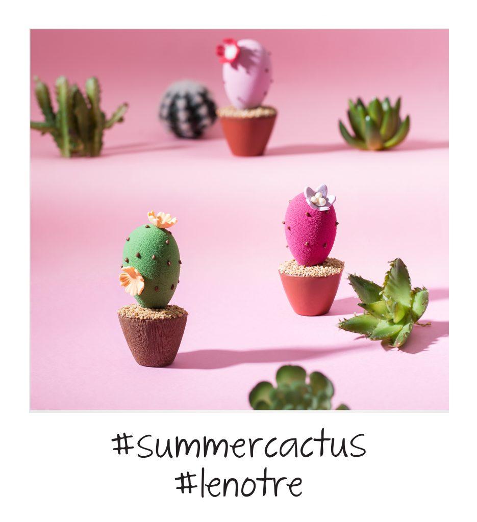 Les minis cactus de l'été Lenôtre