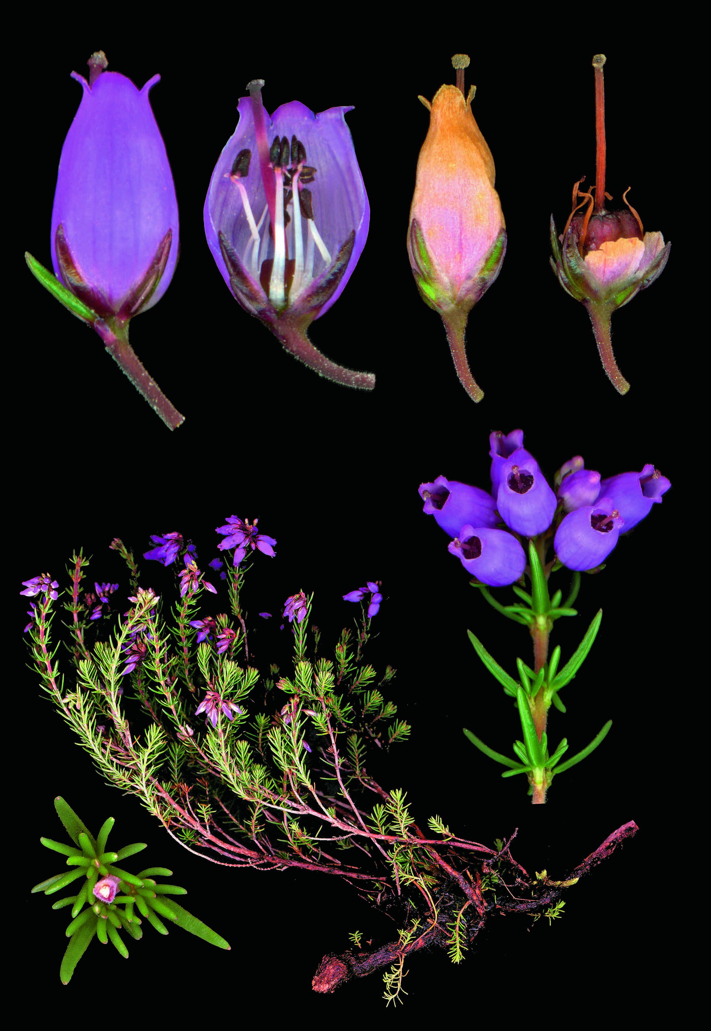l'evasion des sens   l' herbier des fleurs sauvages de nos régions