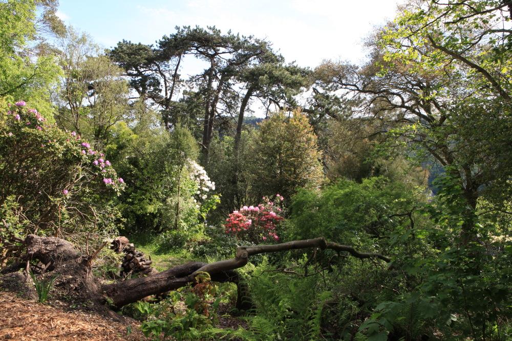 L 39 evasion des sens tr sors de jardins cherbourg - Le jardin secret streaming ...